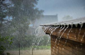 Resultado de imagen de rain pest control