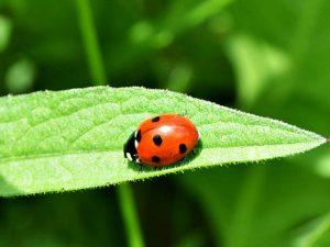 Supersticiones y creencias sobre insectos