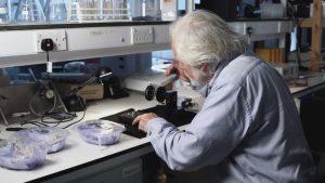 Los insectos ayudan a los científicos a lograr avances médicos