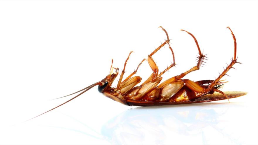 Preguntas frecuentes sobre plagas