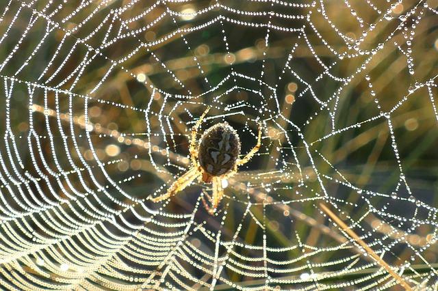 10 datos increíblemente interesantes sobre arañas