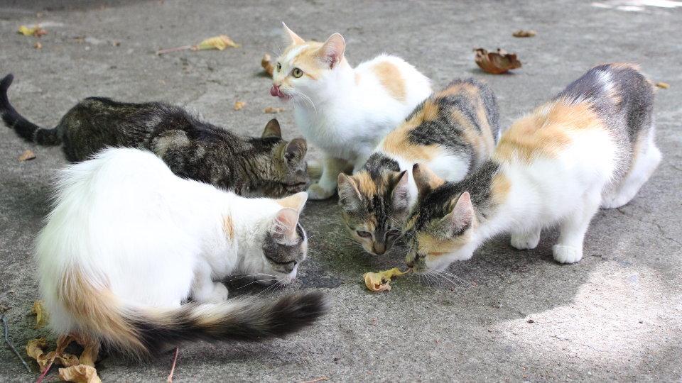 Control de plagas de gatos