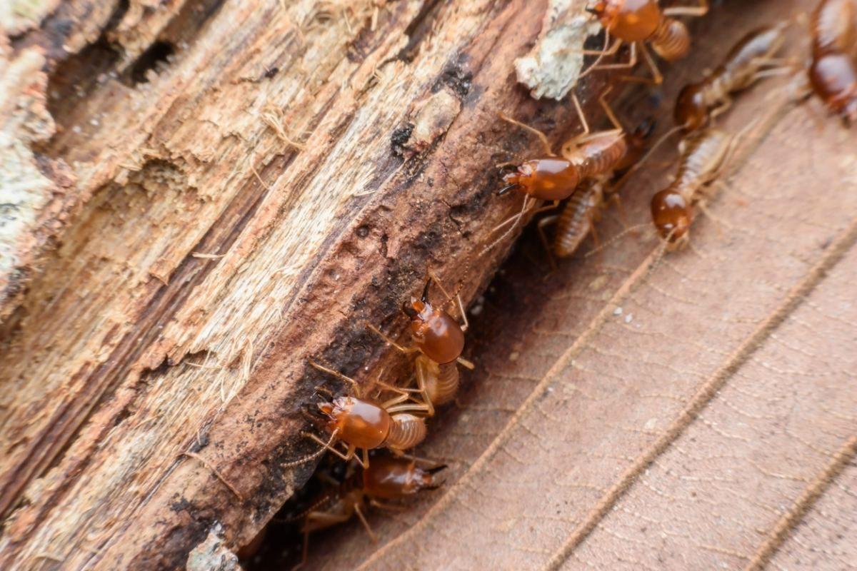 Tratamientos contra termitas este invierno