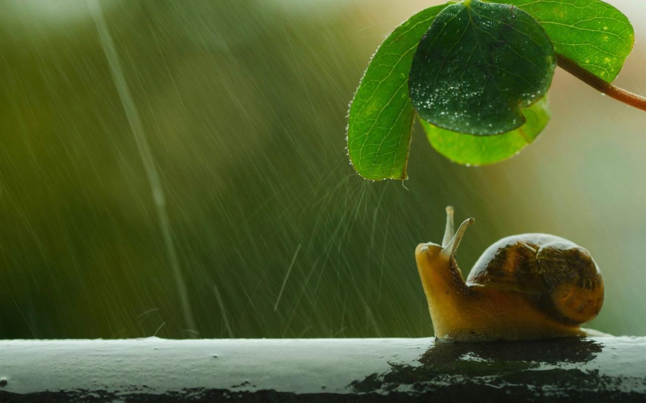 ¿Por qué los caracoles salen con la lluvia?