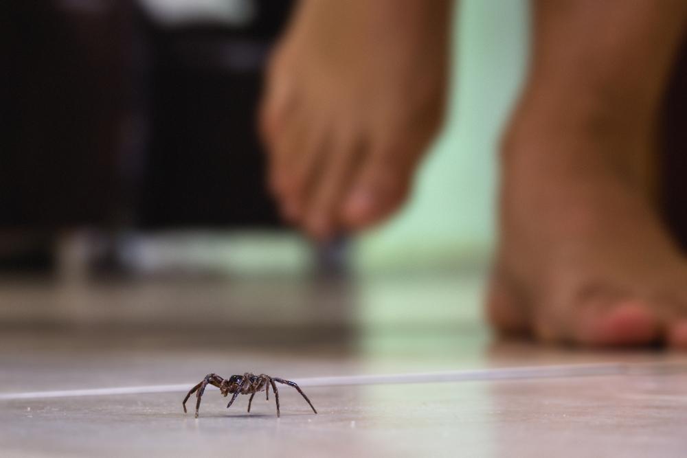 ¿Qué atrae a las arañas a nuestras casas? Plagas de arañas en Barcelona