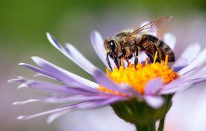 Mucho más que una plaga: El papel de las abejas en el ecosistema