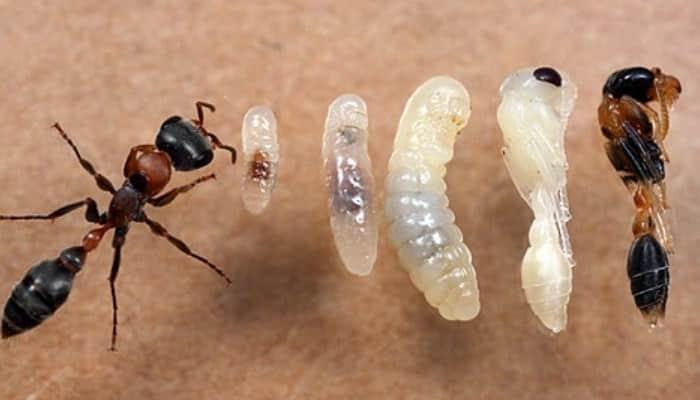 ¿Cuánto viven las plagas?